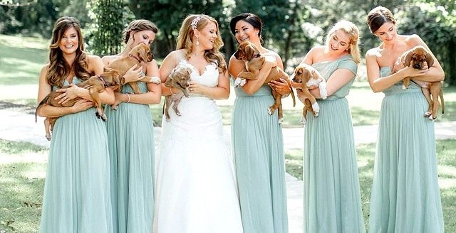 Bridal Party Holds Rescue Puppies Instead of Bouquets for Their Photos