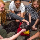 University Adopts Full-Time Wellness Dog to Help Students and Faculty De-Stress
