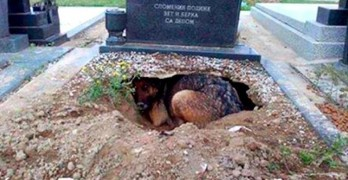 The Real Story Behind the Photo of the Dog Who Dug a Hole in Her Owner's Grave