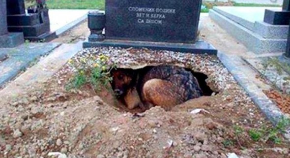 9-21-16-the-real-story-behind-the-dog-who-dug-a-hole-in-her-owners-grave10