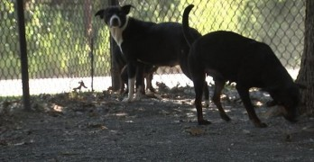 Rescue of Seven Dogs Sparks Stiffer Penalties for Dog Abusers in Georgia