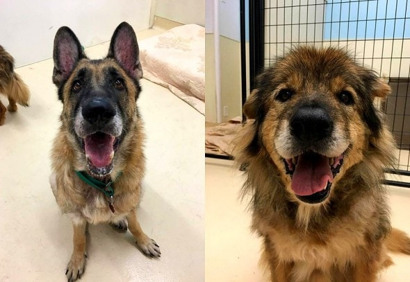 9-23-16-mangy-senior-dog-escapes-his-home-gets-help-for-his-neglected-siblings5