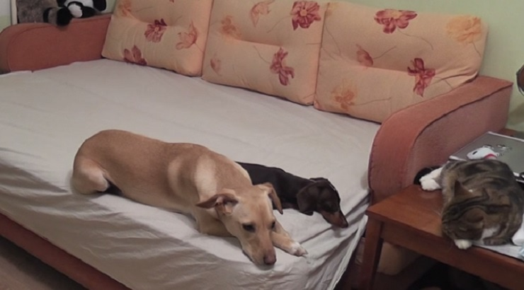 The Utterly Exciting Things Your Pets Get Up to When You're Not Home