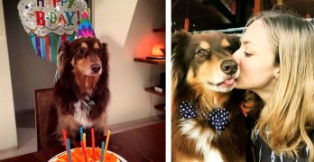 Amanda Seyfried Throws a Birthday Bash for Her Dog, Finn