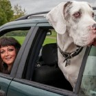 Woman Forced to Drive Dog 2,500 Miles After Airlines Says Dog is Too Big!