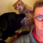 """Dog and Cat Hold Boxing Match During Man's """"Quiet Time"""""""