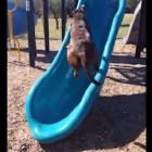 9-29-16-dog-fails-on-slide