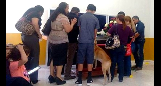 Dog Who Went Missing Two Weeks Before Owner's Death Shows Up at Her Funeral