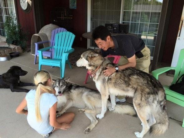 9-9-16-wolf-dog5