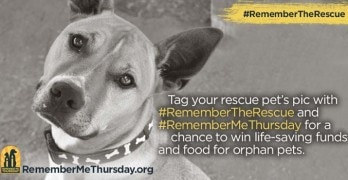 What Are You doing September 22? Light a Candle for Remember Me Thursday to Support Pet Adoption