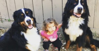 Fatal Levels of Adorable! Tiny Girl, Big Dogs, Humongous Giggles