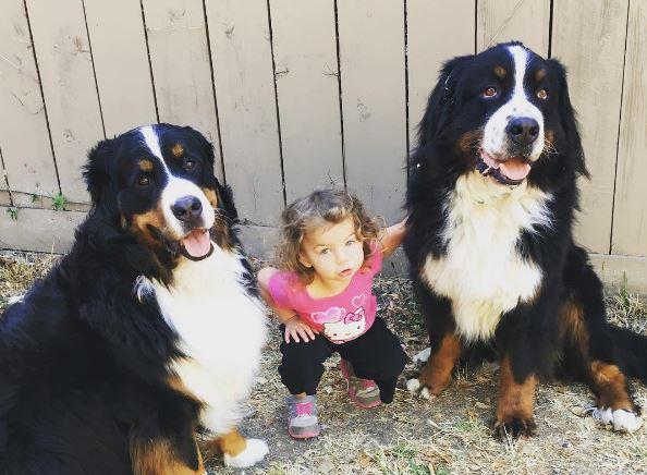 Fatal Levels of Adorable! Tiny Girl, Big Dogs, Humongous Giggles