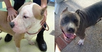 ELSA & HENRY SAVED! Now These Wonderful Dogs Deserve Forever Homes -Can You Help?