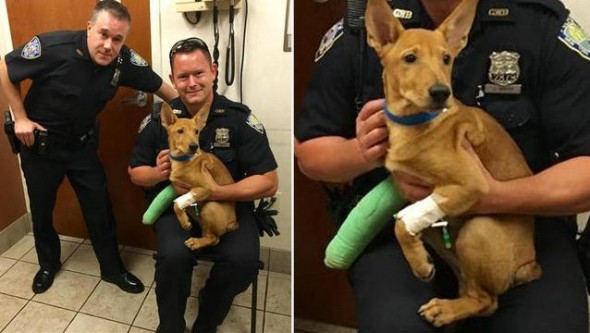 Port Authority's Finest: Officers Fred Corrubia and Jonathan Harder rescued Ronin and saw that he received medical attention.