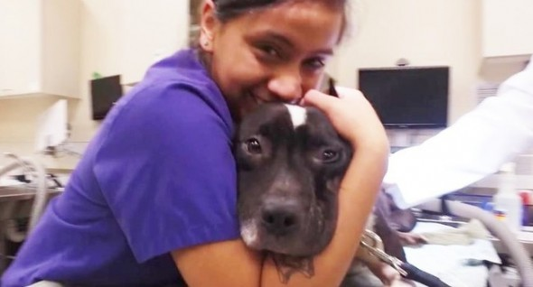 With love and kindness, Gwen's transformation was brisk and beautiful. (Photo: Texas SPCA)
