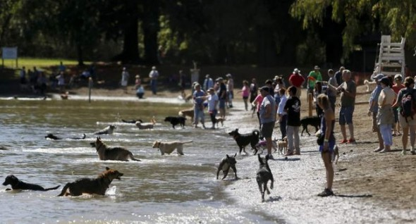 Dog lovers can enjoy two more days of WaterBark before the month is out. (Photo: Beth Schlanker/PressDemocrat)
