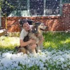 A Final Snowfall: Community Helps Owner Fulfill Promise to Her Dying Husky