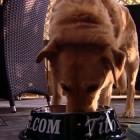 """""""BONE"""" Appétit! Indiana Restaurant Unveils Fancy Patio Menu for Dog Clientele"""