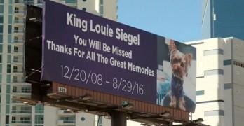 Beloved Dog Memorialized on Las Vegas Billboard