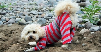 Seattle Woman Wants to Pants Your Dog…But in a Good Way
