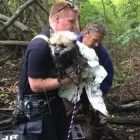 Firefighters Rescue Shivering Dog Nearly Submerged in the Mud