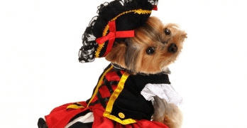 Pets to Celebrate Halloween This Year According to Survey Results