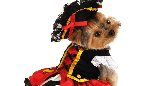 sc 1 st  Life With Dogs & Pets to Celebrate Halloween This Year According to Survey Results