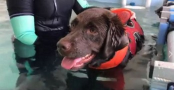 Paralyzed Dog Runs Again With Hydrotherapy Treatment