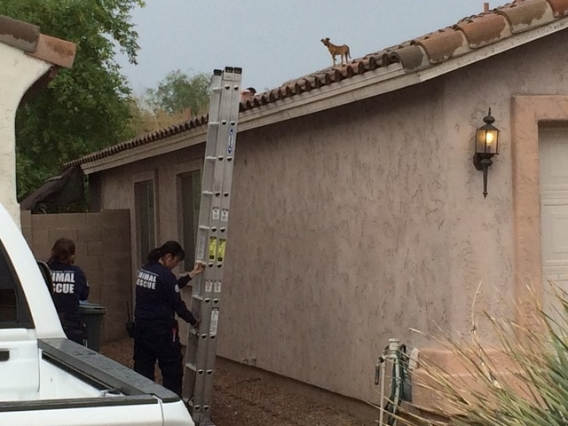Dog Rescued After DAYS on Phoenix Rooftop!