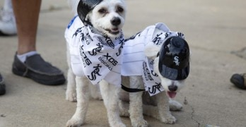 White Sox Set Record for Most Dogs at Sporting Event