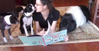 Calling All Boston Terriers & Pigs – It's Storytime!