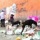 Pets Abandoned & Left Behind Amid Venezuelan Economic Crisis