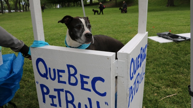 UPDATE: Judge Orders Temporary Stay on Pit Bull Ban in Montreal