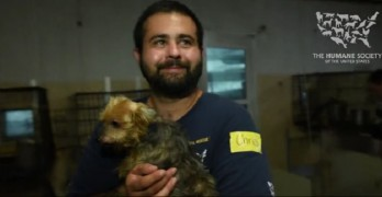US Humane Society Rescues 130 Dogs from Suspected Puppy Mill