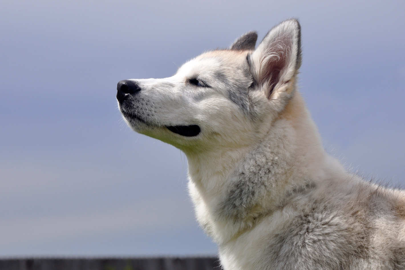 Study Finds That Dogs Can Tell What Time of Day it is by Their Nose