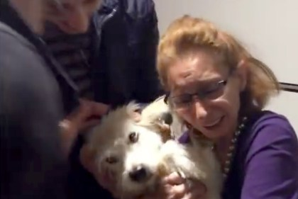 https://www.youtube.com/watch?v=aaw5_Y1SlEY&feature=youtu.be&list=PLC47D6CB659E209DE Screengrab of Syrian dog reuniting with his family in a youtube video 10/7/16 Source: SPCA International/YouTube