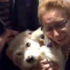 Dog Rescued from Syria Is Reunited With Family in Canada