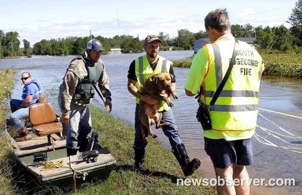 Dogs Fighting To Survive North Carolina Floodwaters Are Rescued