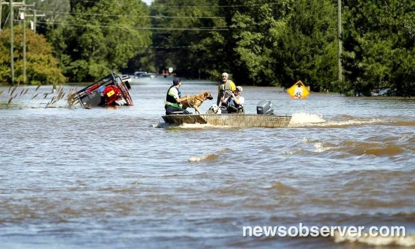 10-10-16-dogs-saved-from-hurricane-matthew-flooding4