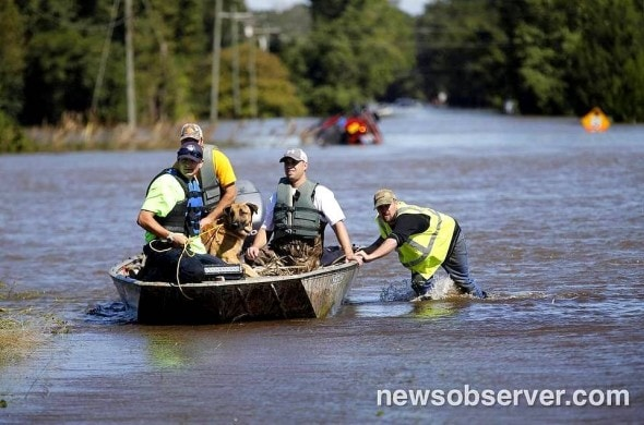 10-10-16-dogs-saved-from-hurricane-matthew-flooding5