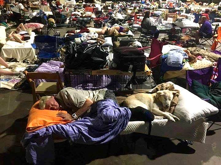10-11-16-hurricane-shelters-accept-pets1