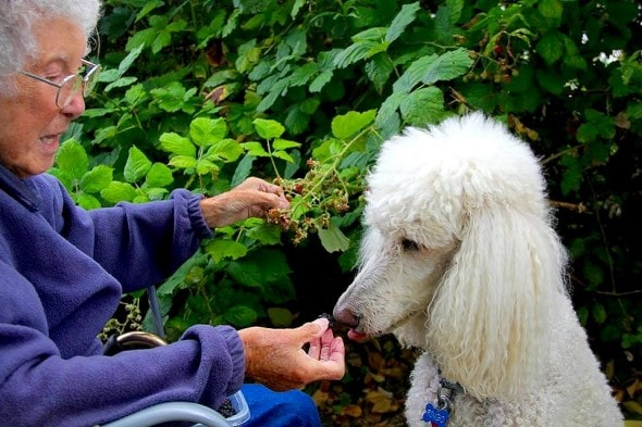 10-12-16-woman-skips-cancer-treatment-to-travel-with-dog11