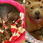 Pregnant Dogs Living in a Basement Rescued Just in Time to Give Birth