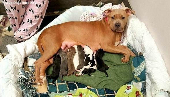 10-13-16-rescue-dog-adopts-best-friends-puppies1