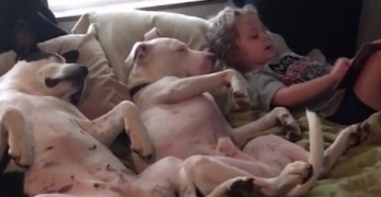 Adorable Little Boy Reads Bedtime Stories to His Dogs