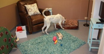 Toledo Area Humane Society Sets up 'Real Life Room' to Help Rescues Feel More at Home