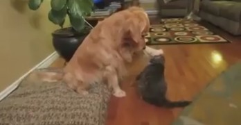 Grateful Dog Thanks Cat Friend for the Hug