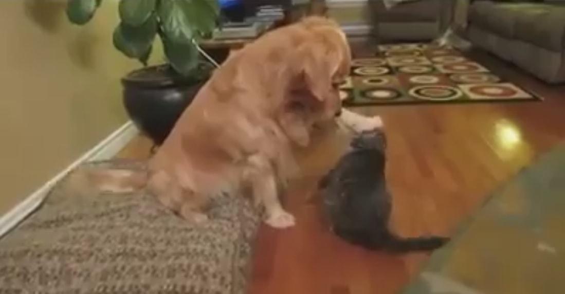 Grateful Dog Thanks Cat Friend for the Hug