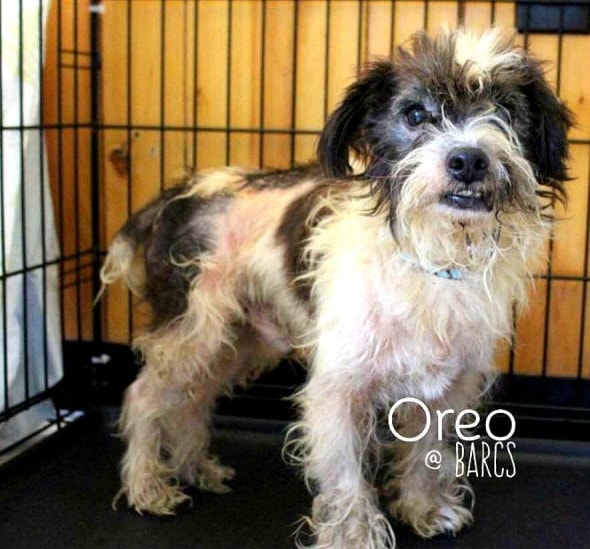 10-18-16-oreo-dumped-for-a-baby1
