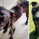 Mangy, Skeletal Dog Makes a Complete Transformation Because of Love